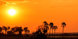 Orange glow sunset in a palm trees landscape. In Africa Stock Photography