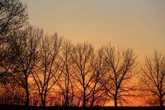 Orange glow of twilight through bare trees Stock Images