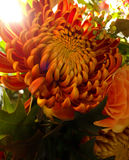 Orange Glowing Autumn Bouquet Royalty Free Stock Images