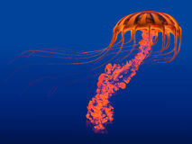 Orange Glowing Jellyfish Stock Photos