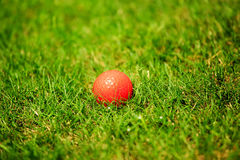 Orange golf ball on the green. Golf ball on the golf course with blured background Stock Photos