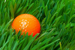 Orange golf ball in the long grass Stock Image