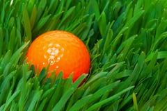 Orange golf ball in the long grass. Closeup Stock Image