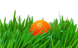 Orange golf ball in the long grass. Closeup on white background Royalty Free Stock Photos
