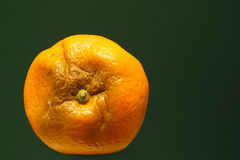 Orange gone bad. Rotton orange Stock Photography