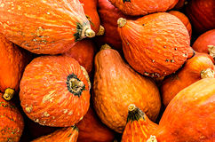 Orange Gourd Pile Royalty Free Stock Photo