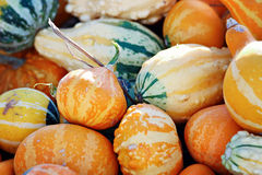 Orange Gourds Royalty Free Stock Photo