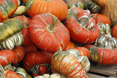 Orange gourds. Royalty Free Stock Photo