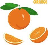 Orange, grüne Wurzeln, Blätter, Scheibe auf weißem Hintergrund, Handzeichnung, Malerei Stockfotografie