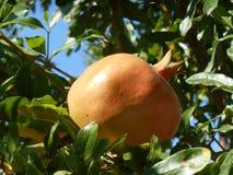 Orange Granatapfel mit Blättern um ihn lizenzfreies stockbild