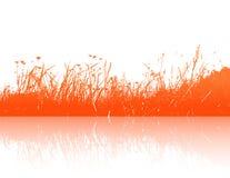 Orange grass reflection. Vector. Art Royalty Free Stock Photo
