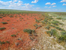 Orange grass in the steppe. Royalty Free Stock Photo