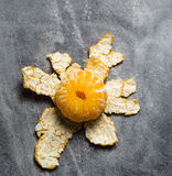 Orange on a gray background Stock Photography