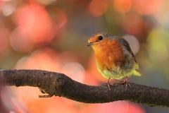 Orange Gray Yellow Bird on Trunk Stock Image