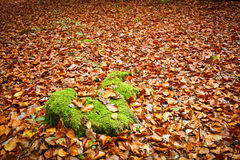 Orange and green. Image of the orange and green Royalty Free Stock Images