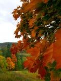 Colorful autumn in Latvia. Orange and green autumn leaves stock photos