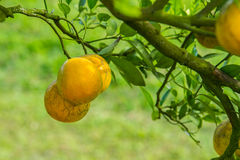 Orange with green background Stock Photos