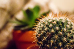 Orange and Green Cactus Plant in a Selective Focus Photography during Daytime Royalty Free Stock Photo