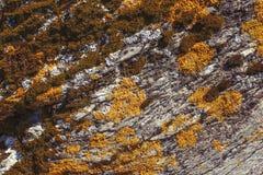 Orange and green coloured lichen on rock, texture background. Orange and green coloured lichen closeup on rock, texture background stock images