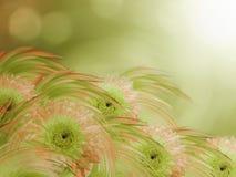 Orange-green dahlias flowers  on green-sunny blurred background. Royalty Free Stock Photo