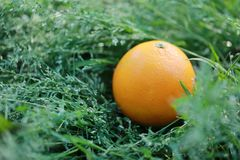 An orange on green grass lawn at sunny day in summer spring park garden forest balance healthy life fruit stock images