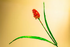 Orange and green paint made flower Royalty Free Stock Photo