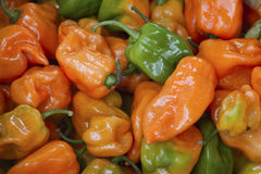Orange and Green Peppers Royalty Free Stock Photo
