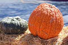 Orange and green Pumpkins, blue background stock images