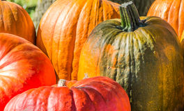 Orange, green and red pumpkins Stock Photos