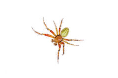 Orange green spider on a white background Royalty Free Stock Images