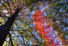 Orange green Tree Fall Foliage Royalty Free Stock Images