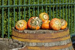 Orange, Green, And White Fall Pumpkin Royalty Free Stock Image