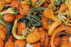 Orange Green Yellow Gourds Calabash Pumpkins Washington Stock Images
