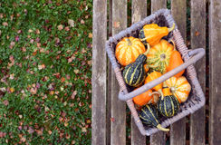 Orange, green and yellow ornamental gourds in a basket Royalty Free Stock Photos