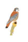 Orange grey bird. On seed plant royalty free illustration