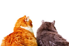 Orange and grey cats Stock Images