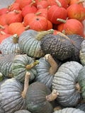 Orange and grey pumpkins Stock Image