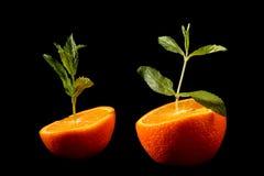 Orange groving Stock Photos