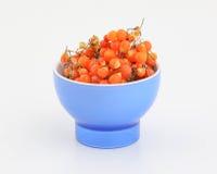 Orange gumberry Royalty Free Stock Photography