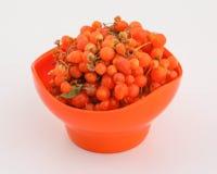 Orange gumberry Stock Image