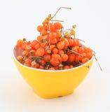 Orange gumberry Stock Images