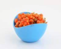 Orange gumberry Stock Photos