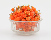 Orange gumberry Royalty Free Stock Images