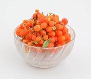 Orange gumberry Stock Photography
