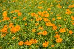 orange härliga blommor fotografering för bildbyråer