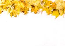 Orange höstbladgräns på vit bakgrund, bästa sikt, kopieringsutrymme arkivfoton