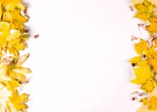 Orange höstbladgräns på vit bakgrund, bästa sikt, kopieringsutrymme royaltyfri foto