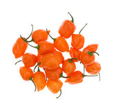 Orange habanero peppers on a white background Royalty Free Stock Photography