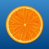 Orange half - vector. Sliced orange half showing detail on a blue background. Vector Stock Photography