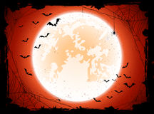 Orange Halloween background with bats Stock Images